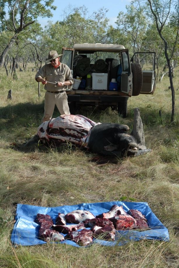 field butchering a buffalo