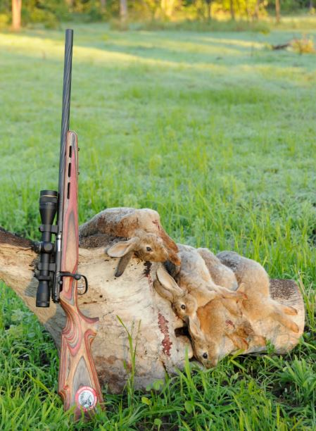 aussiehunter Savage Mark II BRJ 22LR with bunnies