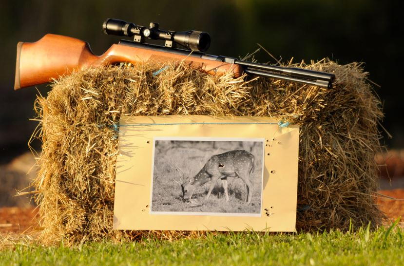 aussiehunter air rifles provide excellent hunting practice