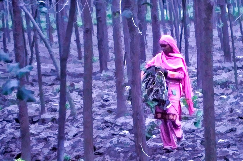 aussiehunter travel India - a woman in pink walks through a somber forest at dusk