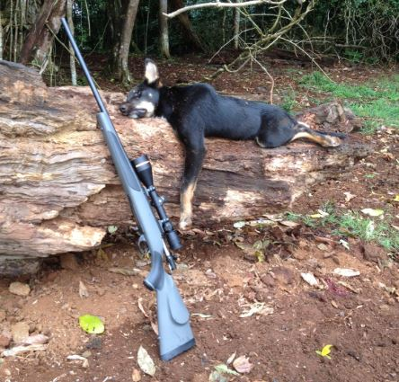 wild-dog-and-rifle