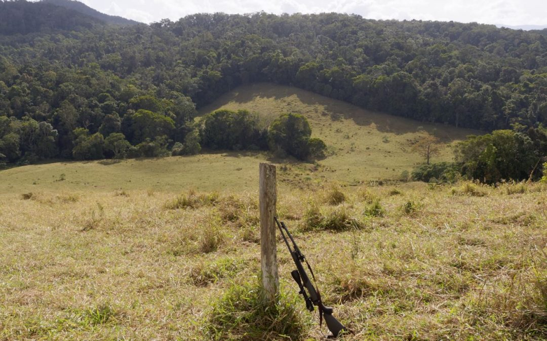 Stake-out Hunting Feral Pigs and Dogs