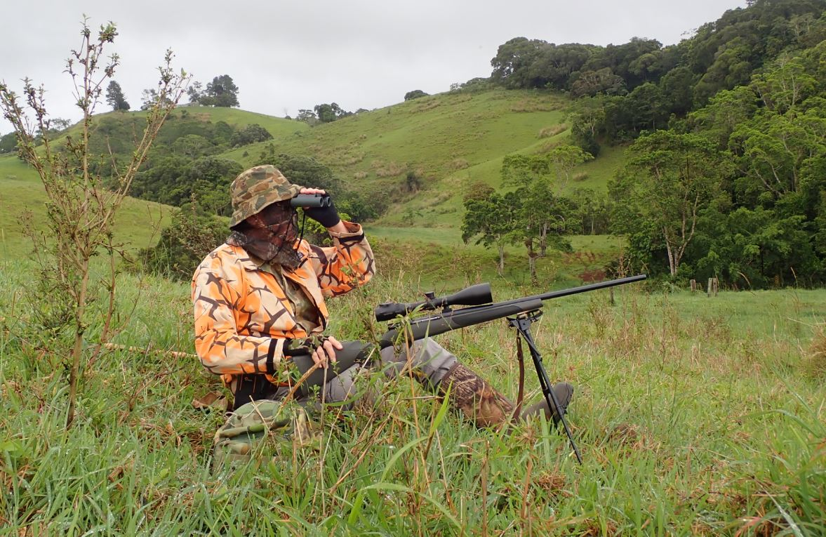 glassing for game from a predator hunting stand