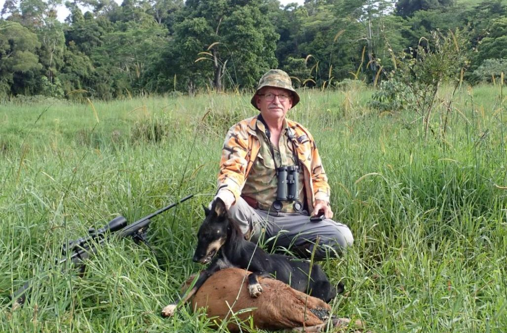 Stalking wild dogs on their kill